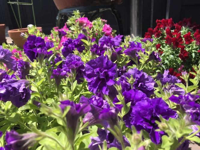 お庭の花がきれいですイメージ3