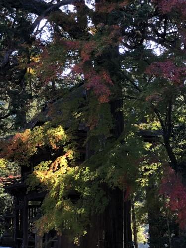 秋ですイメージ1