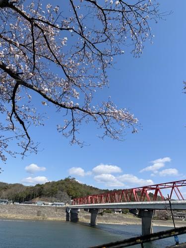 小瀬鵜飼と桜の木イメージ2