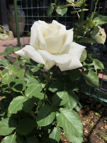 お庭の花がきれいですイメージ2