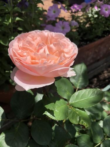 お庭の花がきれいですイメージ1