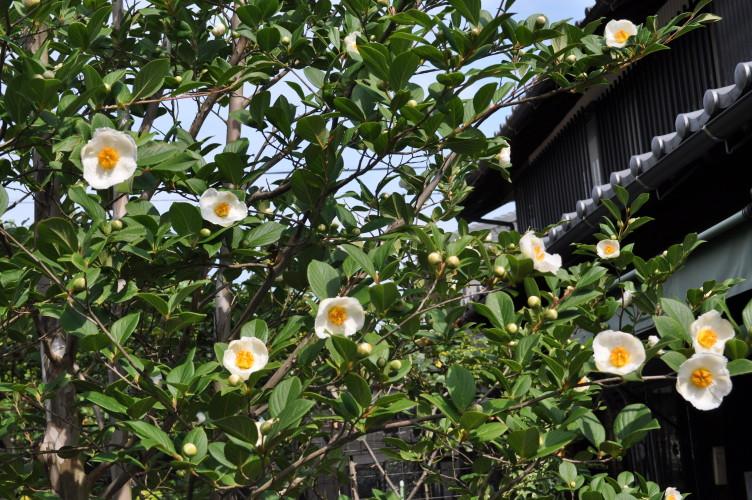 咲きましたイメージ1