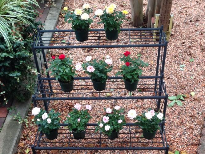 庭の花壇イメージ1
