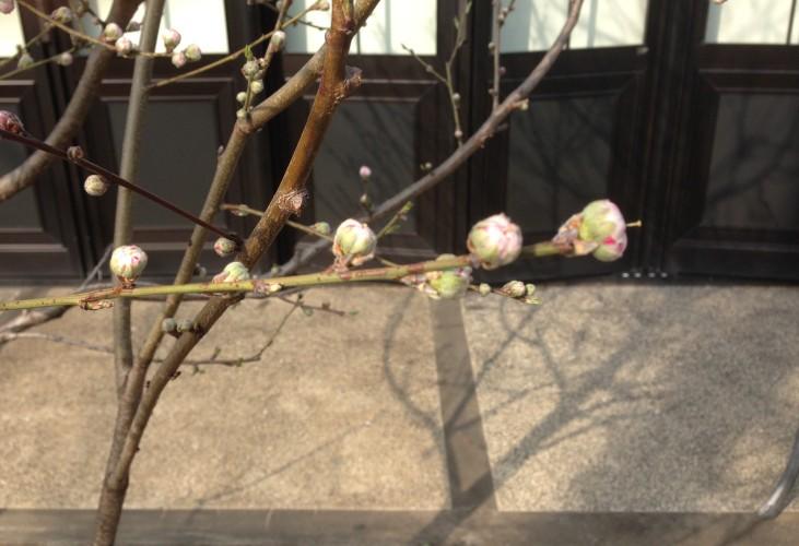花ももイメージ1