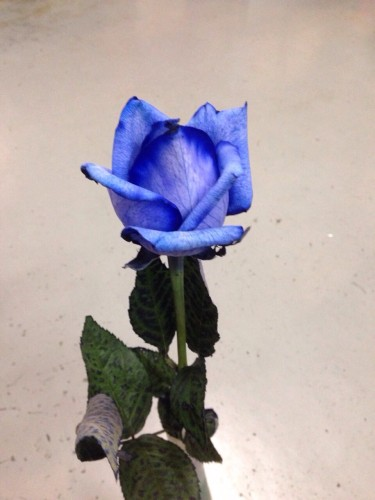 青いばらの花イメージ1