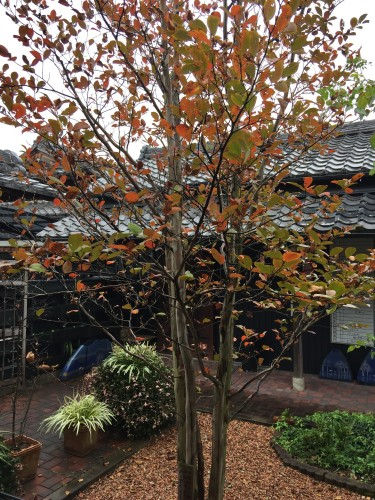 沙羅双樹イメージ1