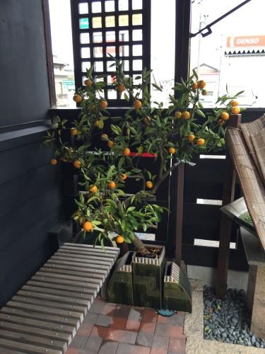 蜜柑イメージ1