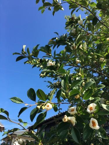 沙羅双樹まとめイメージ2