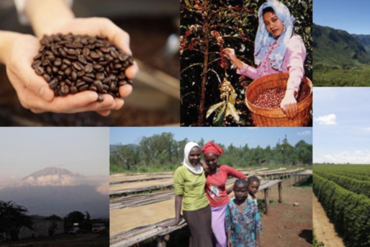 コーヒー豆増量セール三日目!イメージ1