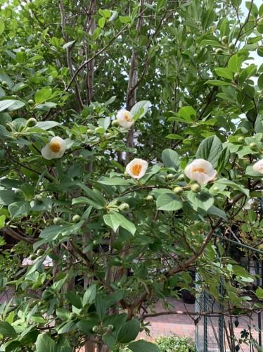 花を咲かせました♪イメージ1