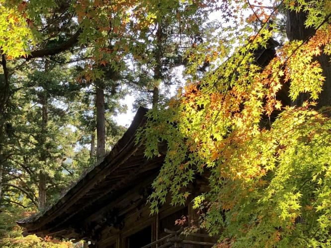 秋ですイメージ2
