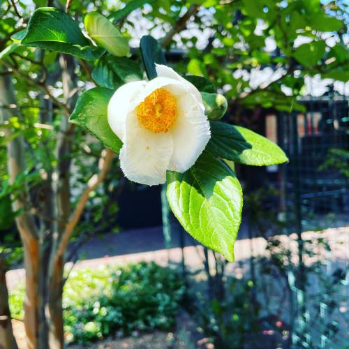 開花イメージ1