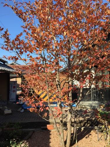 沙羅双樹の色イメージ1