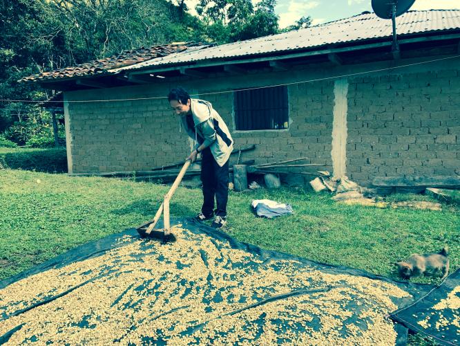 ペルーのコーヒー栽培の話イメージ1