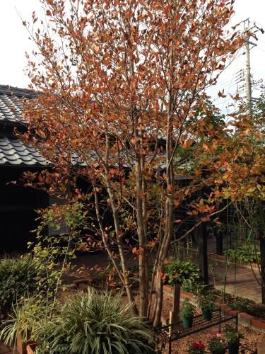 秋です。イメージ1