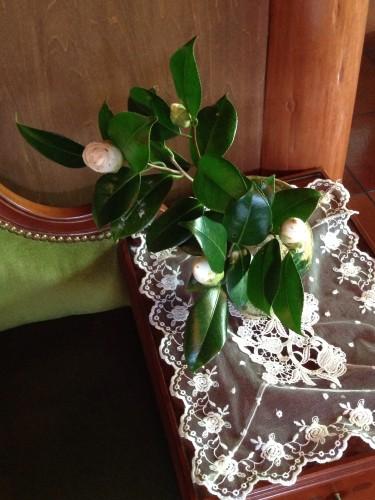 椿の花イメージ1