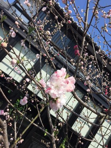 ももの花イメージ1